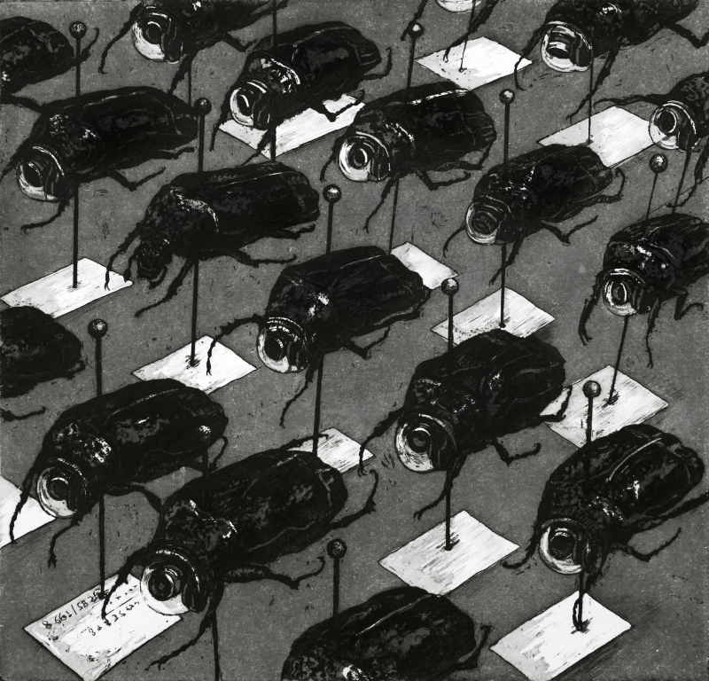 Coleoptera 10 l